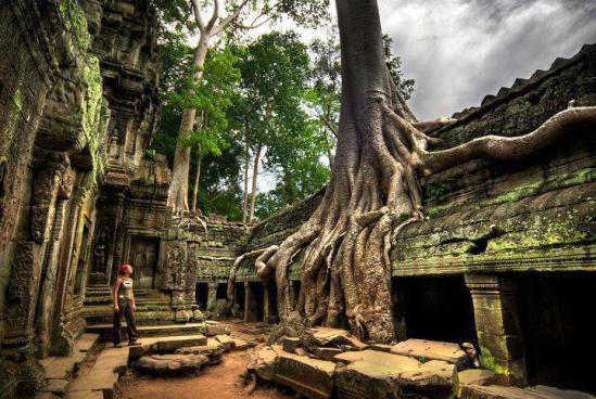 cambodia ankor wat old tree